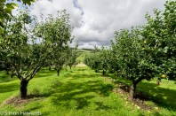 The orchard at Snowshill Manor