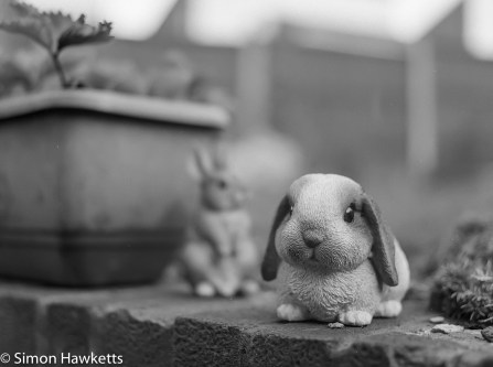 Bronica ETRsi - Two rabbits