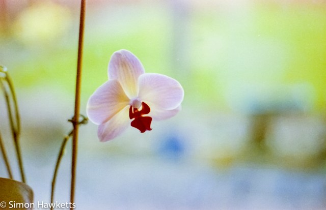 Digibase c41 processing results - Orchid