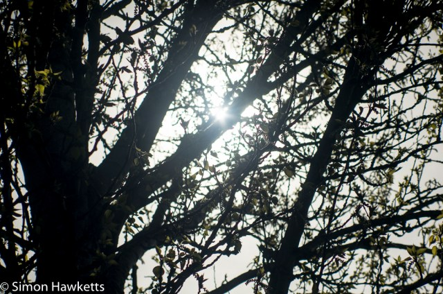 Helios 85 - 210 Auto Zoom sample picture - sun peeping out from the branch of a tree