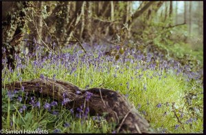 Pentax MZ-3 sample photographs - Fallen branch with bluebells
