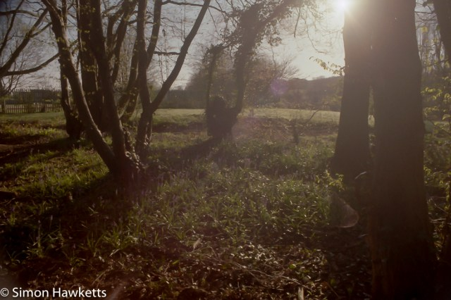 Pentax Z-20 sample pictures - bluebell woods