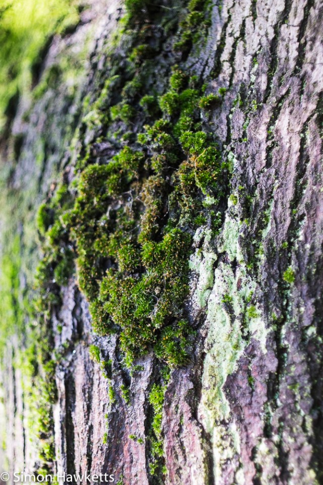 Sigma Mini-Wide on Fuji X-T1 sample pictures - close up of moss on a tree