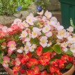 Fuji S2 Pro sample pictures - Flowers in RAW at 400 ISO