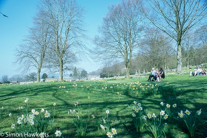 Pentax Z-1P & Agfa CT-100 slide film - Chatsworth house garden