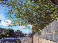 Ricoh R1v pictures - wall and tree