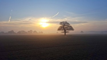Misty Photos - Lone Tree