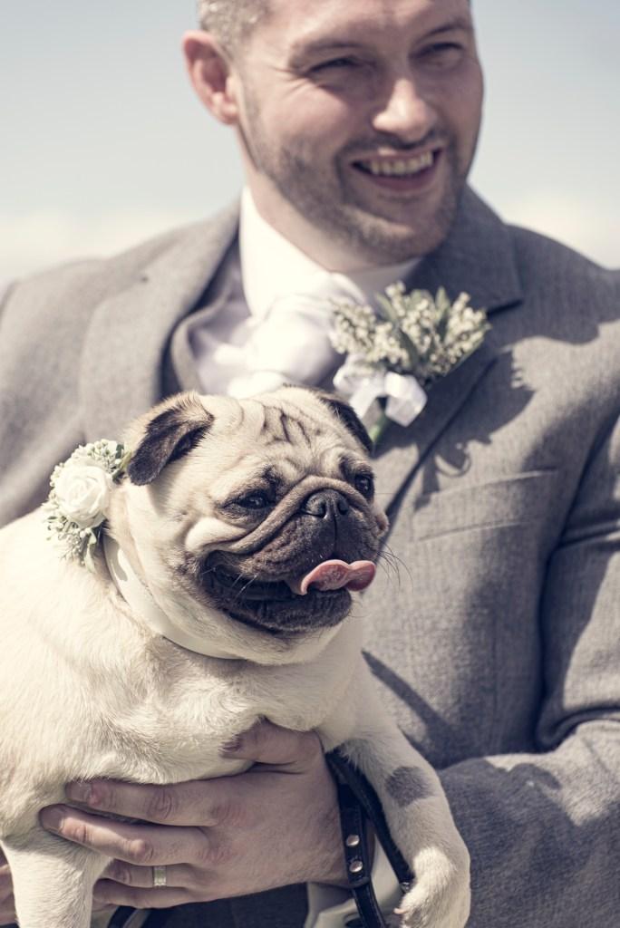 Dogs welcome - Daniel & Kellie, Murrayshall 1