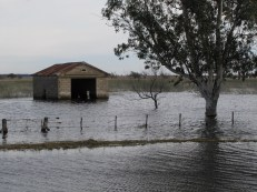 Flooded Pampa 3