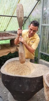 Coffee stomping (removing the husks from the dried beans)