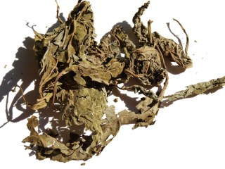 Read About Dangers of Smoking Salvia