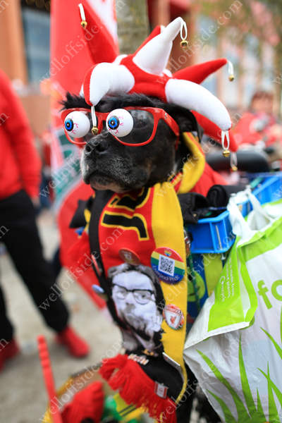 A dog dressed in Liverpool regalia ahead of their match against Hull City at Anfield