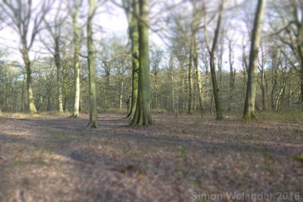 Lady Grove, Hitch Wood, Herts 2016-03-25 16.26.08