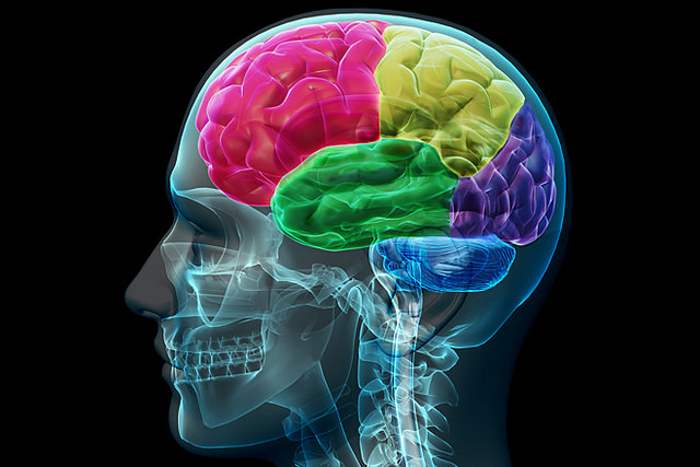 brain, resilience in foreign language learning