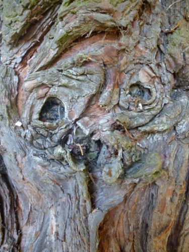 maybe it's just be that suspects a face in this tree bark