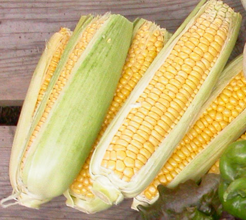 Sweetcorn - needs to be < 12 hours old IMO