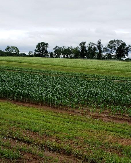 profeta farms corn fields
