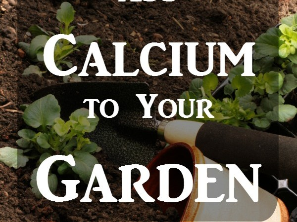 How to Add Calcium to Your Garden for Stronger Plants