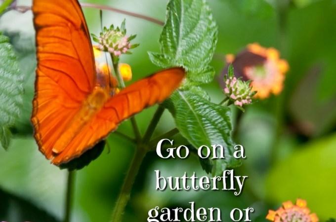 Butterfly Garden House Field Trip
