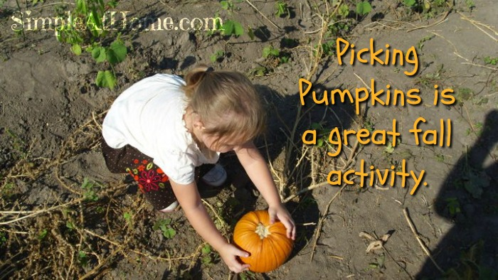 Pick your own pumpkins on this exciting pumpkin patch field trip.