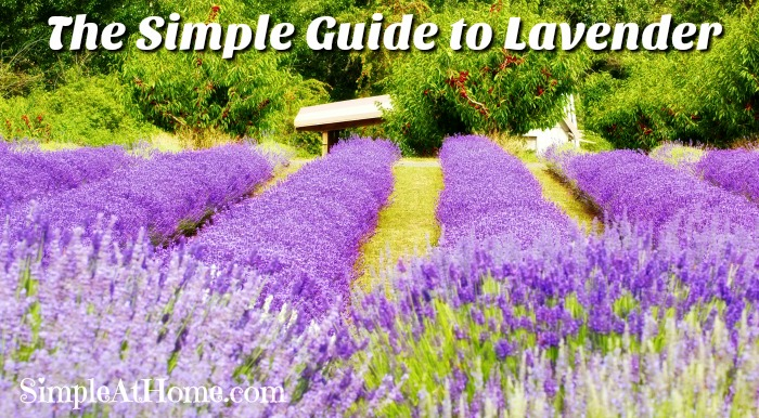 The Simple Guide to Everything Lavender