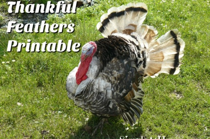 How a Turkey Grows – Turkey Unit Study