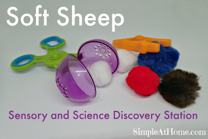 Soft Sheep Sensory and Science Discovery Station