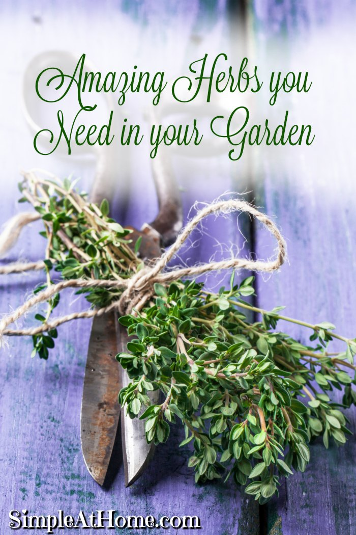 Amazing herbs every garden needs
