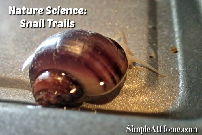 Nature Science: Snail Trails