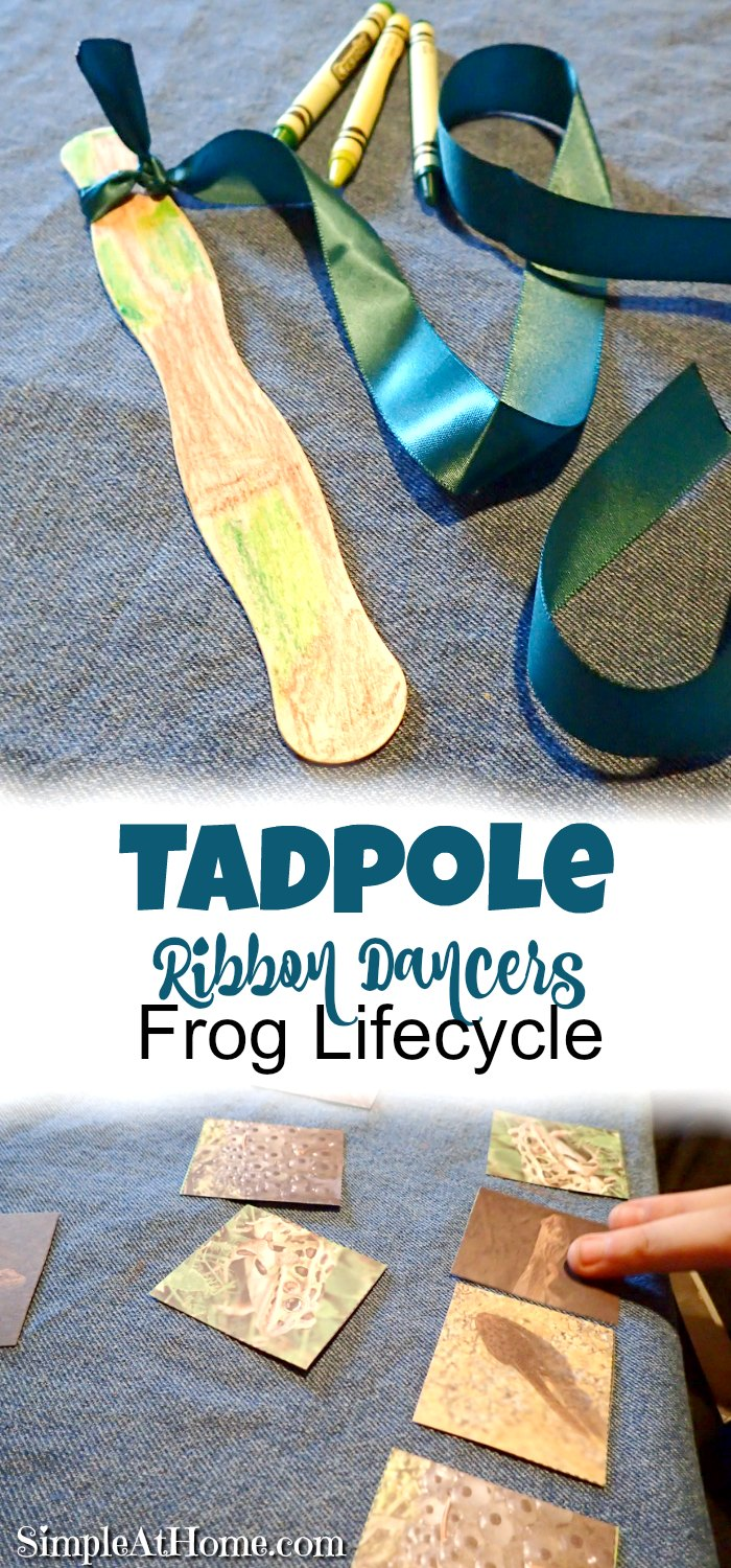 Frog lifecycle and tadpole ribbon dancer