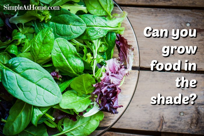 It is easy to grow food in the shade