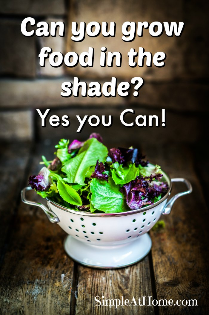 Leave no waisted space in your garden this year by growing food in the shade too.