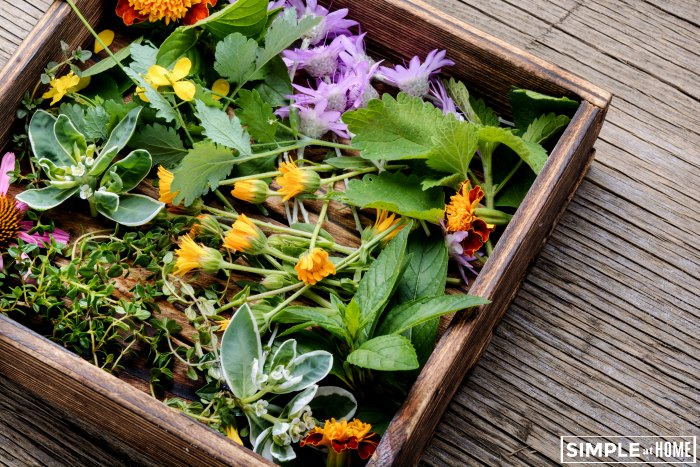 best medicinal herbs for your garden