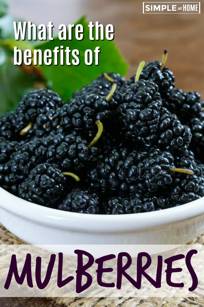 Explore the Benefits Of Mulberry