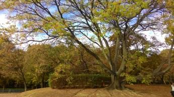 the tree :)