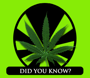 marijuana, facts, NORML, prohibition, states, report,
