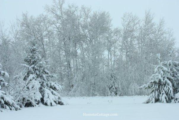 HometoCottage.com Brrr... winter