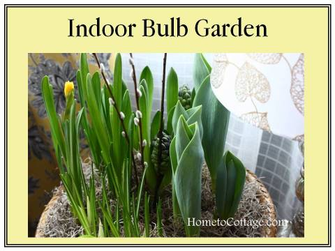 HometoCottage.com Indoor Bulb Garden