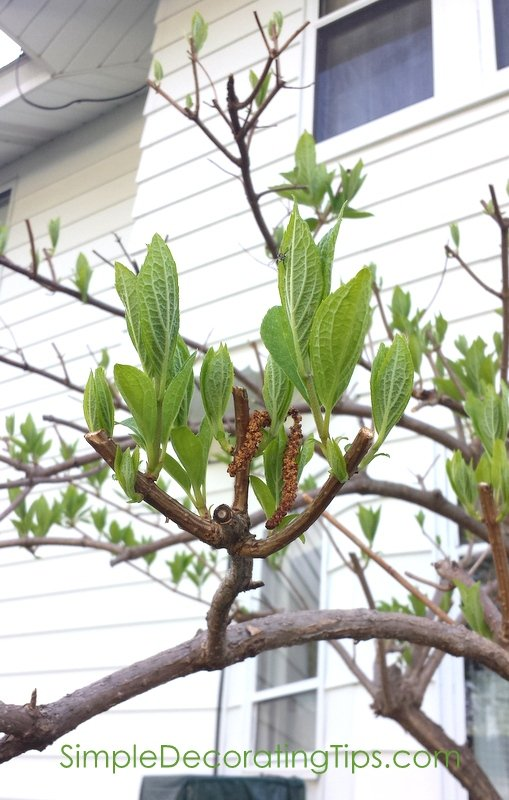 SimpleDecoratingTips.com buds now growing leaves