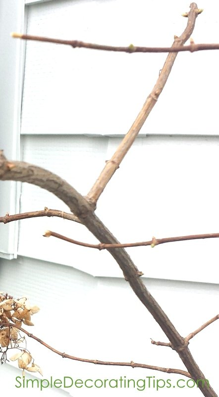SimpleDecoratingTips.com buds on branches
