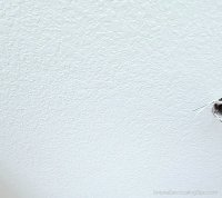 CHANGING POPCORN CEILINGS TO KNOCKDOWN - SIMPLE DECORATING ...