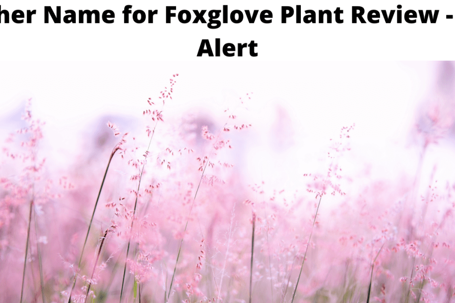 Other Name for Foxglove Plant Review - Be Alert
