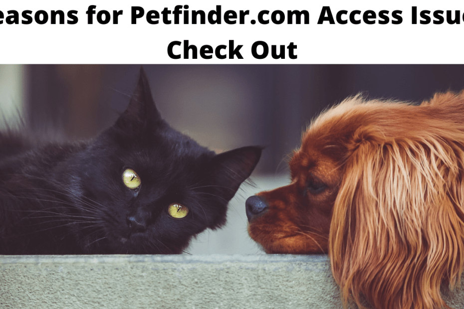 Reasons for Petfinder.com Access Issue - Check Out