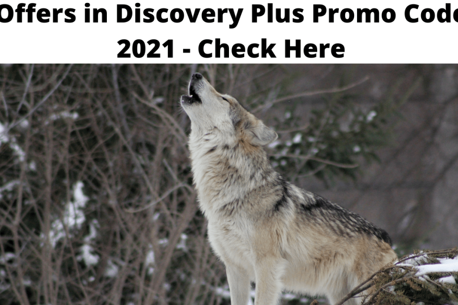 Offers in Discovery Plus Promo Code 2021 - Check Here