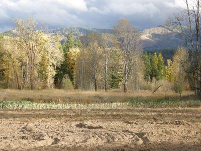 Aspen trees turned golden beyond the tilled garden.