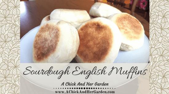 homestead-blog-hop-feature-sourdough-english-muffins