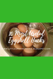 Homestead Blog Hop - 10 Most Useful Eggshell Hacks