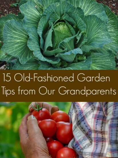 Homestead Bog Hop Feature - Old Fashioned Garden Tips