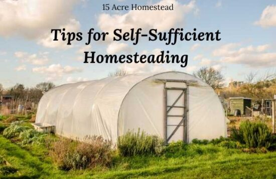 Homestead Blog Hop Feature - Tips-for-Self-sufficient-Homesteading