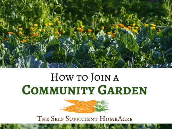 Homestead Blog Hop Feature - How to Join a Community Garden